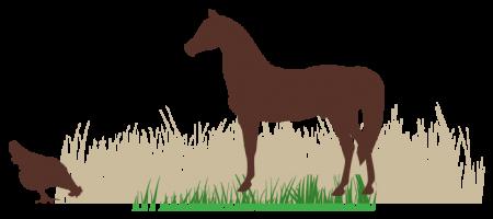 סוס ותרנגולת