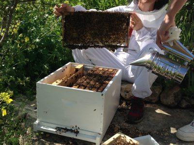 דבורים1